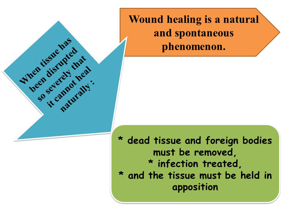 Wound healing is a natural and spontaneous phenomenon. When tissue has been disrupted so severely that it cannot heal naturally : * dead tissue and fo