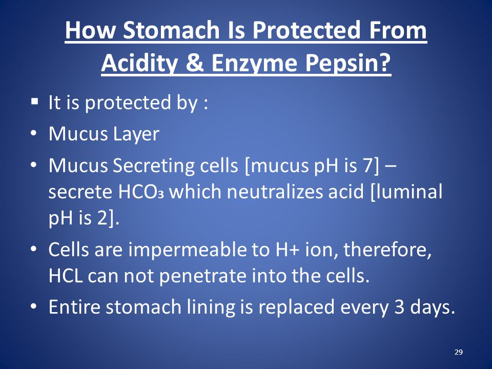 How Stomach Is Protected From Acidity & Enzyme Pepsin?  It is protected by : Mucus Layer Mucus Secreting cells [mucus pH is 7] – secrete HCO 3 which