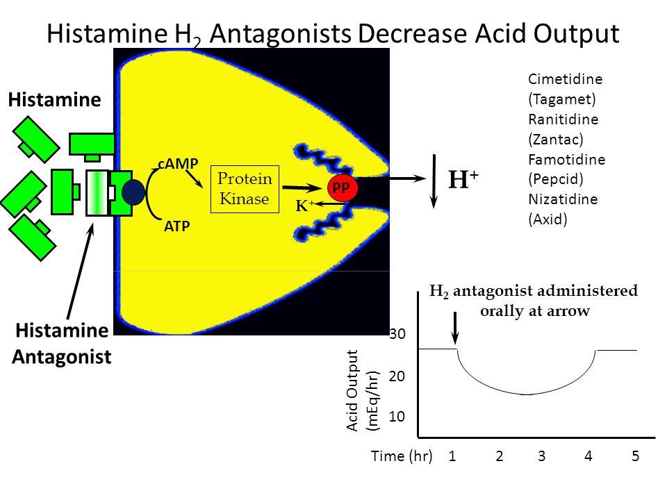 Histamine H 2 Antagonists Decrease Acid Output Histamine Protein Kinase ATP cAMP K+K+ H+H+ Histamine Antagonist Acid Output (mEq/hr) Time (hr) 1 2 3 4 5 H 2 antagonist administered orally at arrow 10 20 30 PP Cimetidine (Tagamet) Ranitidine (Zantac) Famotidine (Pepcid) Nizatidine (Axid)