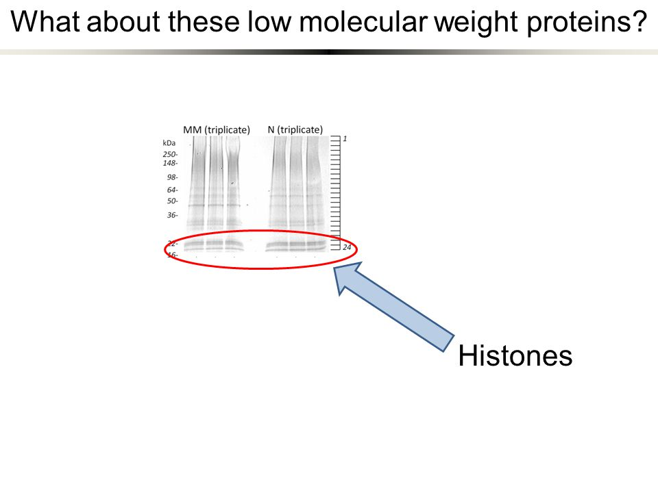 What about these low molecular weight proteins? Histones