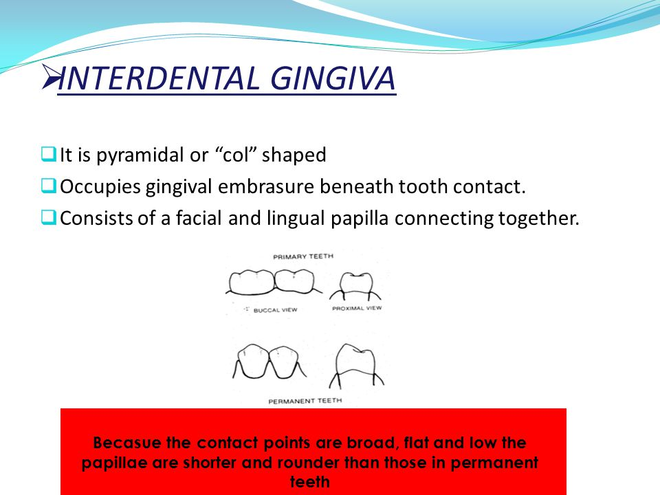 """ INTERDENTAL GINGIVA  It is pyramidal or """"col"""" shaped  Occupies gingival embrasure beneath tooth contact.  Consists of a facial and lingual papill"""