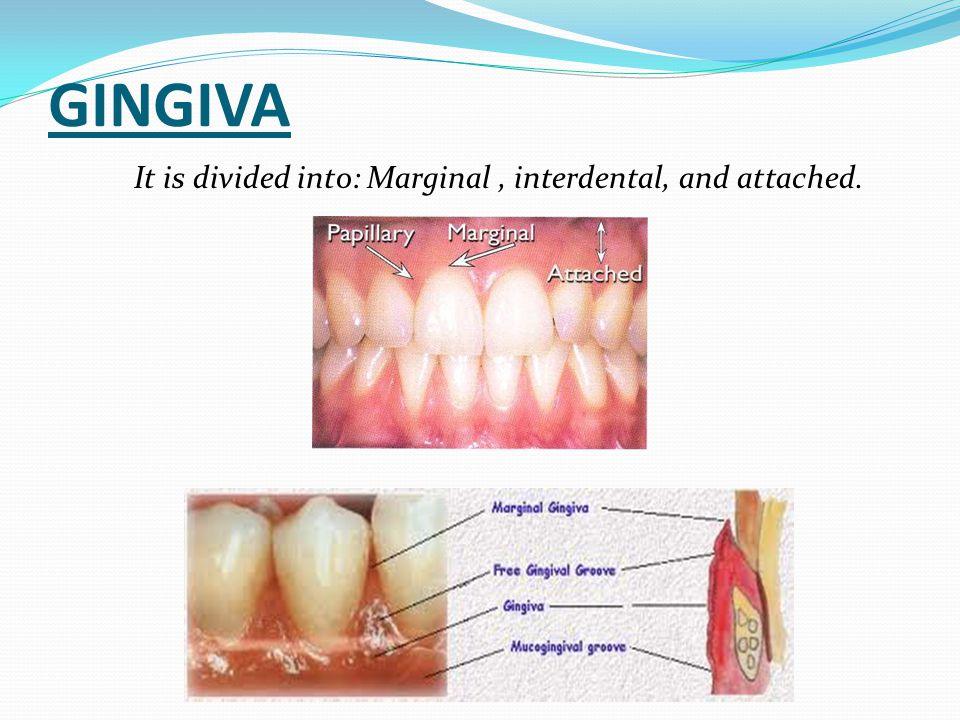  Malposed teeth have increased tendency of accumulating plaque.
