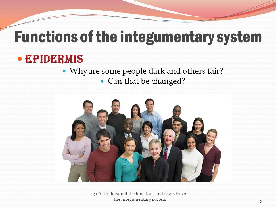 Functions of the integumentary system Epidermis Why are some people dark and others fair? Can that be changed? 3.06: Understand the functions and diso