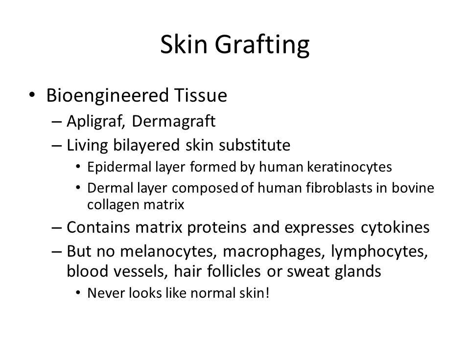 Skin Grafting Bioengineered Tissue – Apligraf, Dermagraft – Living bilayered skin substitute Epidermal layer formed by human keratinocytes Dermal laye