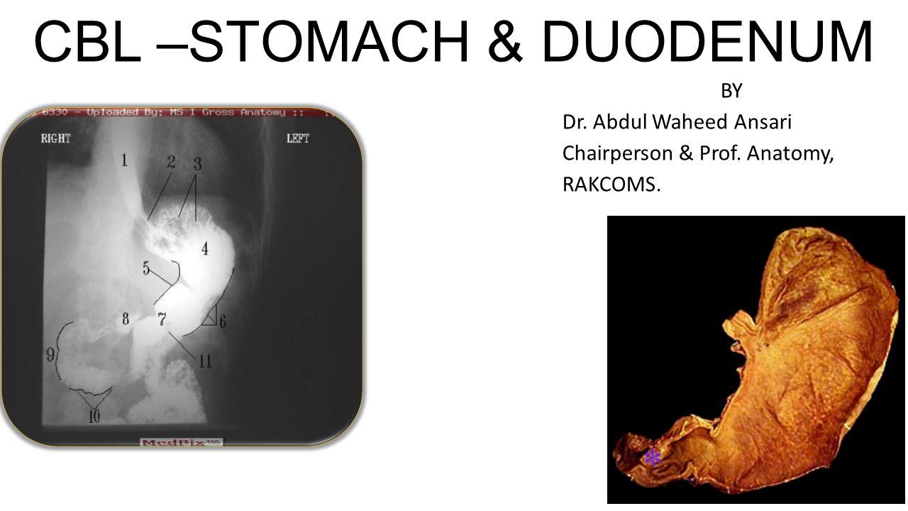 CBL –STOMACH & DUODENUM BY Dr. Abdul Waheed Ansari Chairperson & Prof. Anatomy, RAKCOMS.