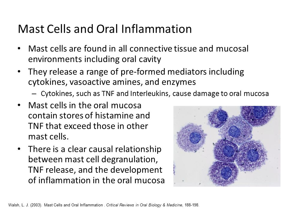 Mast Cells and Oral Inflammation Mast cells are found in all connective tissue and mucosal environments including oral cavity They release a range of pre-formed mediators including cytokines, vasoactive amines, and enzymes – Cytokines, such as TNF and Interleukins, cause damage to oral mucosa Mast cells in the oral mucosa contain stores of histamine and TNF that exceed those in other mast cells.