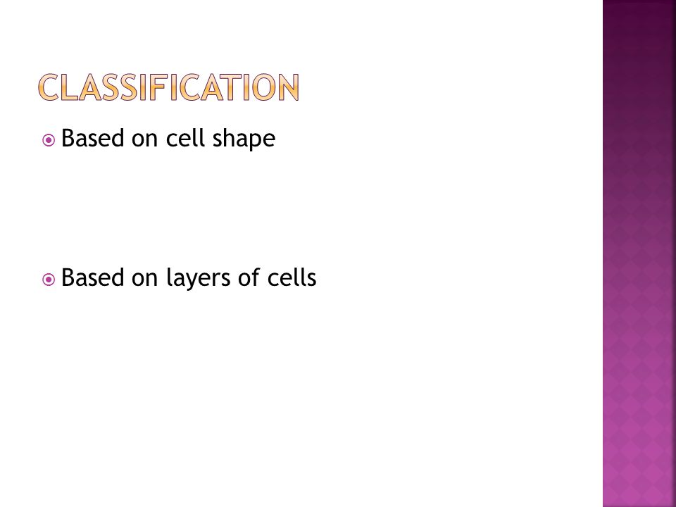  Based on cell shape  Based on layers of cells