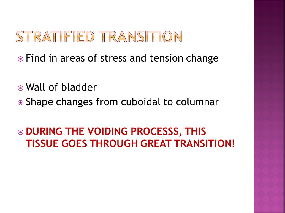  Find in areas of stress and tension change  Wall of bladder  Shape changes from cuboidal to columnar  DURING THE VOIDING PROCESSS, THIS TISSUE GOES THROUGH GREAT TRANSITION!