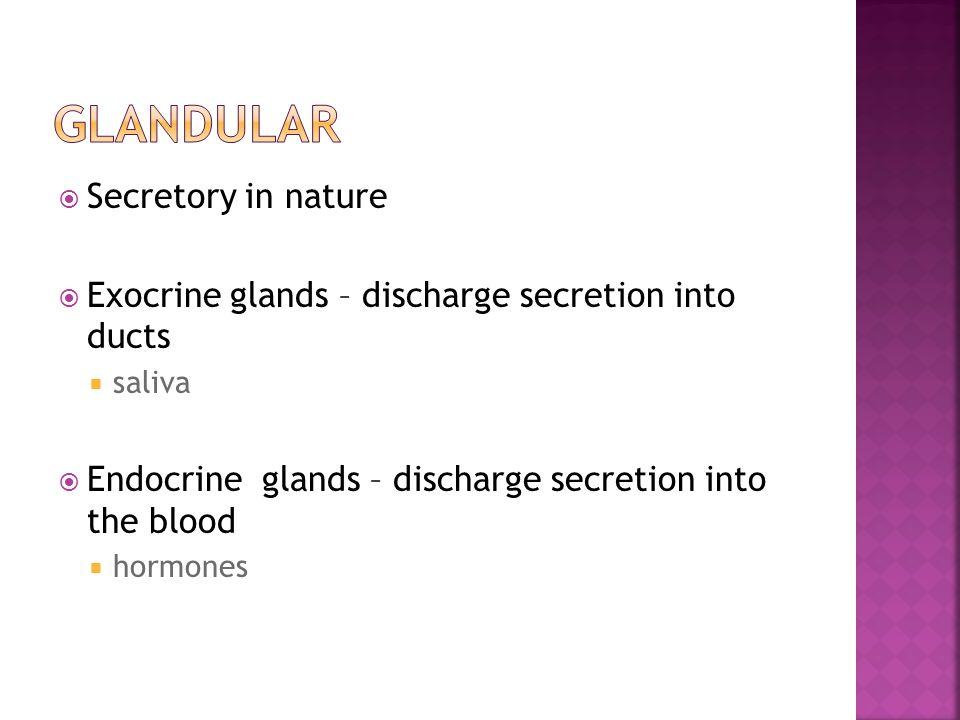  Secretory in nature  Exocrine glands – discharge secretion into ducts  saliva  Endocrine glands – discharge secretion into the blood  hormones