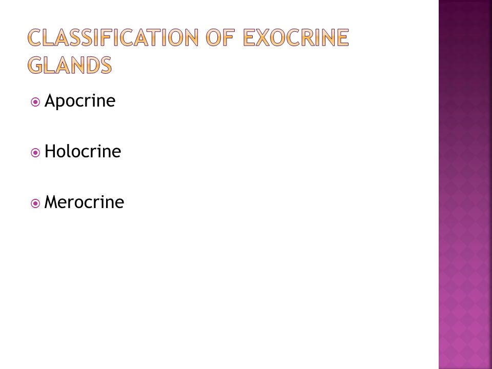  Apocrine  Holocrine  Merocrine