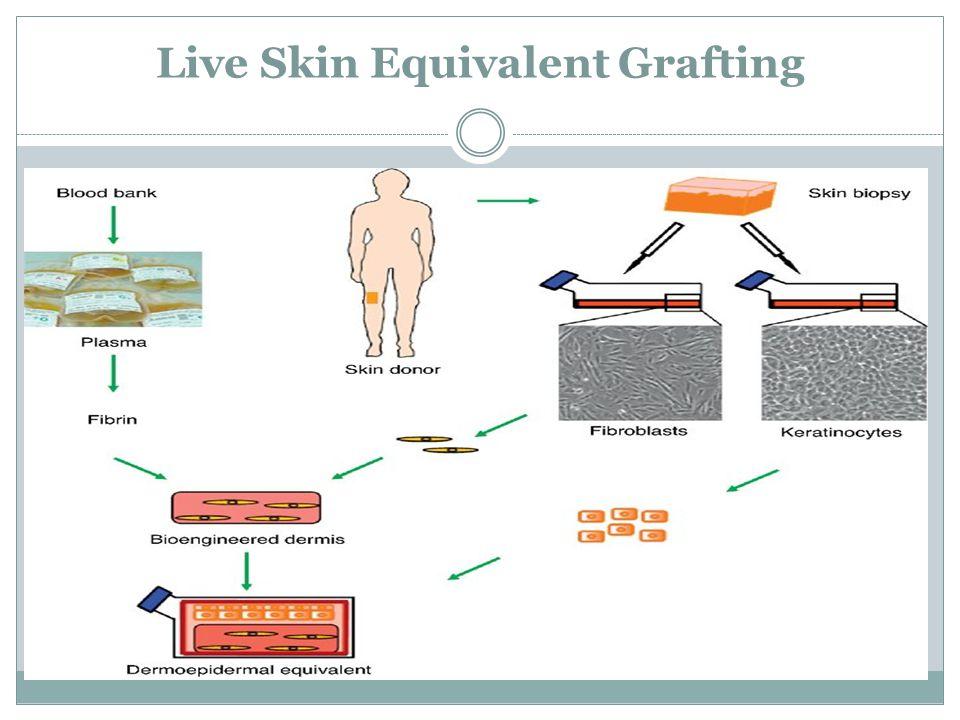 Live Skin Equivalent Grafting