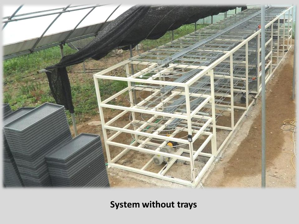 System without trays