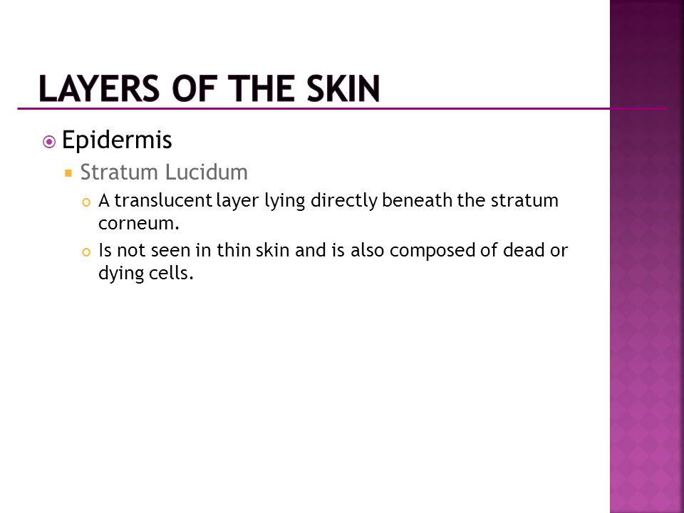  Epidermis  Stratum Lucidum A translucent layer lying directly beneath the stratum corneum. Is not seen in thin skin and is also composed of dead or