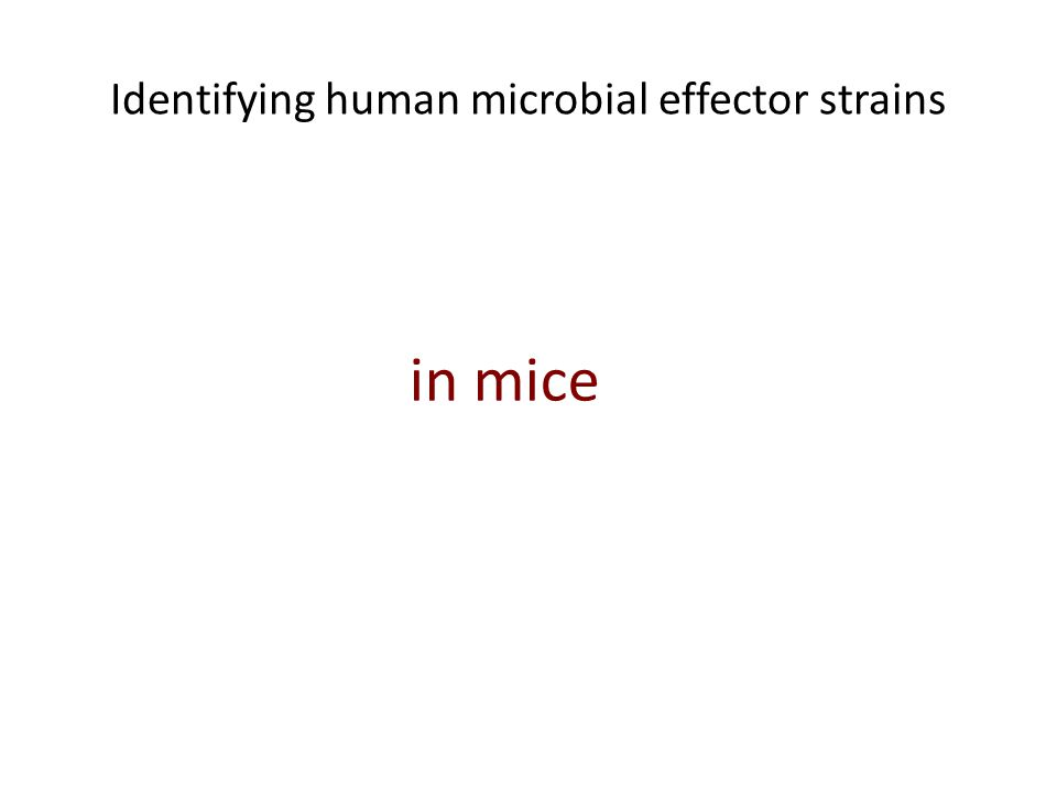 Identifying human microbial effector strains in mice