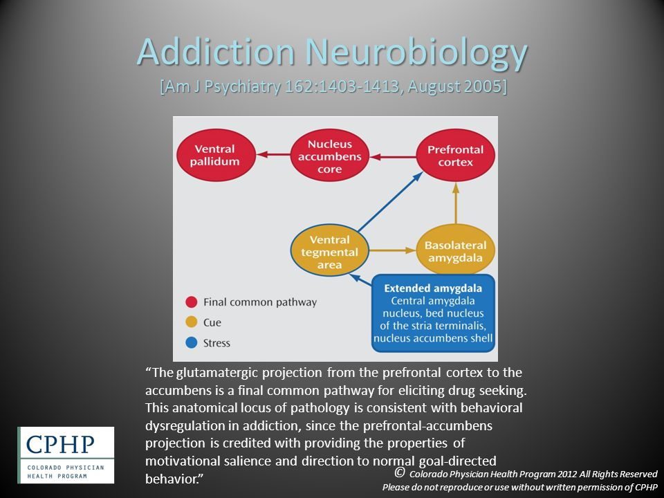 Addiction Neurobiology [Am J Psychiatry 162:1403-1413, August 2005] The glutamatergic projection from the prefrontal cortex to the accumbens is a final common pathway for eliciting drug seeking.