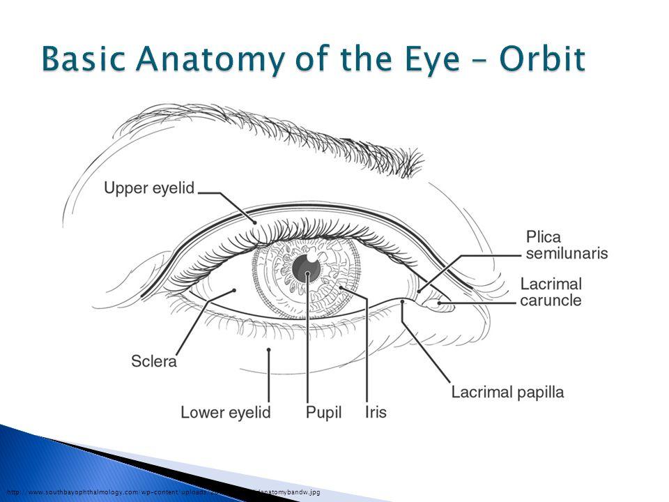 http://www.southbayophthalmology.com/wp-content/uploads/2010/05/eyelidanatomybandw.jpg