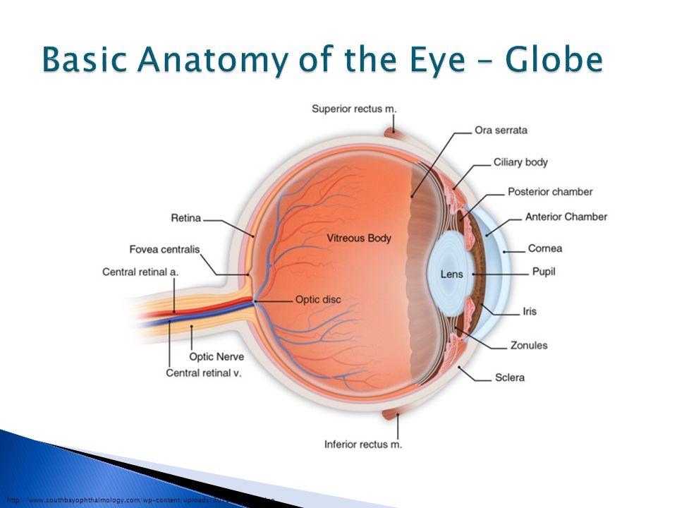 http://www.southbayophthalmology.com/wp-content/uploads/2010/04/G021.jpg