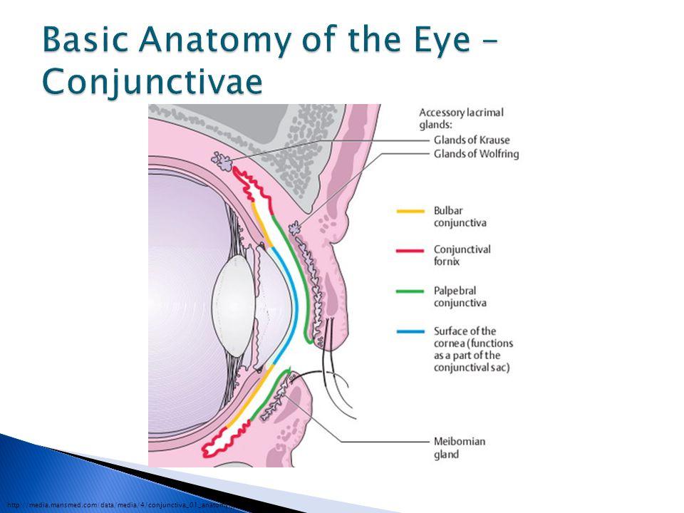 http://www.anatomyatlases.org/firstaid/images/eyeB.jpg