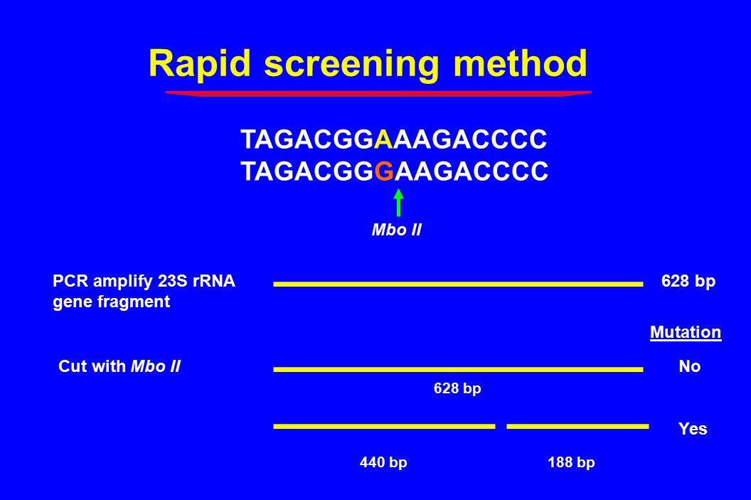 Rapid screening method PCR amplify 23S rRNA gene fragment 628 bp TAGACGGAAAGACCCC TAGACGGGAAGACCCC Mbo II Cut with Mbo IINo Mutation Yes 440 bp188 bp 628 bp