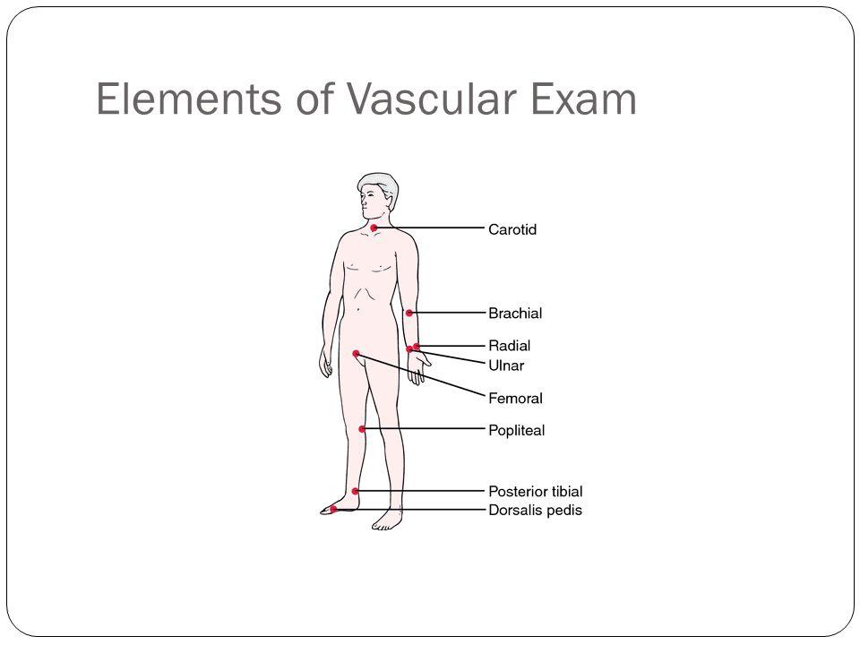 Elements of Vascular Exam