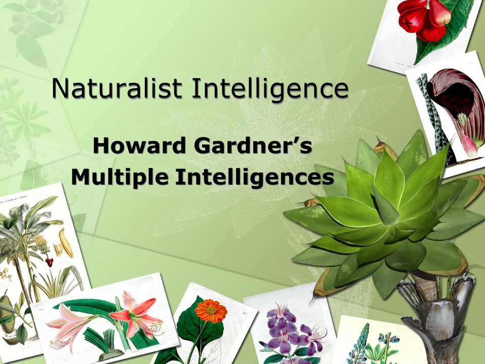 Naturalist Intelligence Howard Gardner's Multiple Intelligences Howard Gardner's Multiple Intelligences