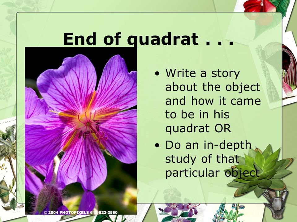 End of quadrat...