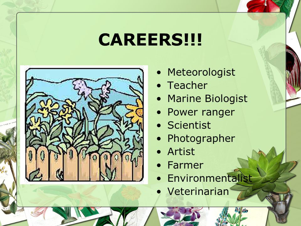 CAREERS!!! Meteorologist Teacher Marine Biologist Power ranger Scientist Photographer Artist Farmer Environmentalist Veterinarian