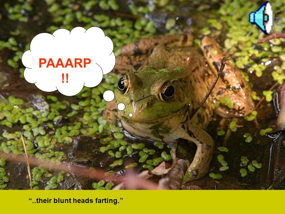 … gross-bellied frogs were cocked..