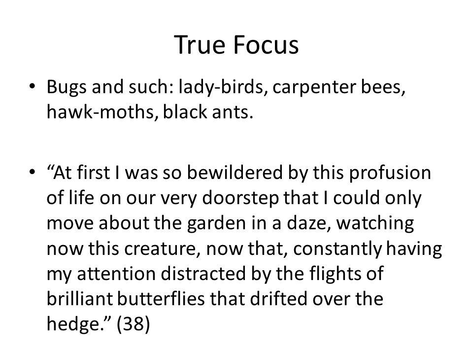 True Focus Bugs and such: lady-birds, carpenter bees, hawk-moths, black ants.