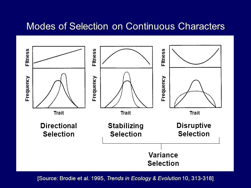 Modes of Selection on Continuous Characters [Source: Brodie et al.