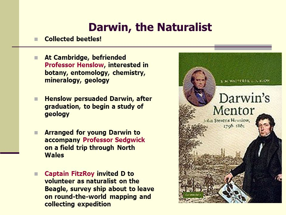Darwin's Early Years Mediocre student during early education Loved animals and the outdoors 1825, entered Edinburgh University to study medicine, no stomach for surgery Developed fondness for natural science, especially Marine Zoology Went to Cambridge, to enter the clergy!