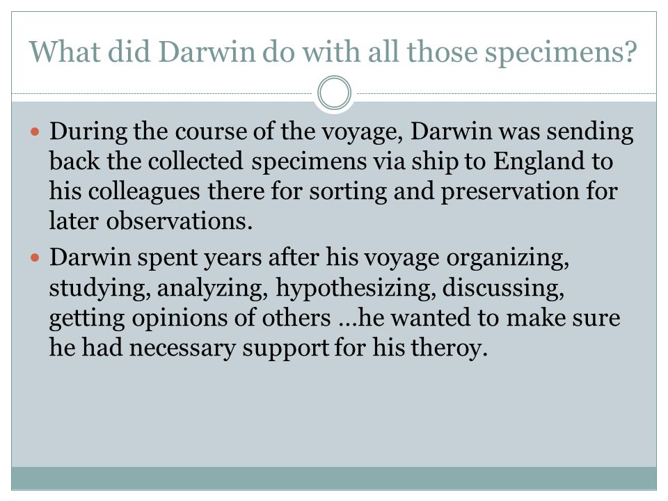 What did Darwin do with all those specimens.