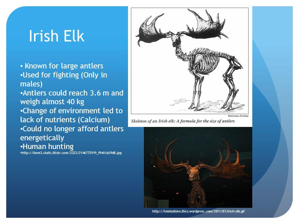 Moose vs. Irish Elk (Moen, Pastor, & Cohen, 1999)
