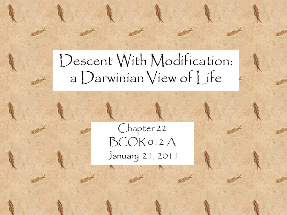 Descent With Modification: a Darwinian View of Life Chapter 22 BCOR 012 A January 21, 2011