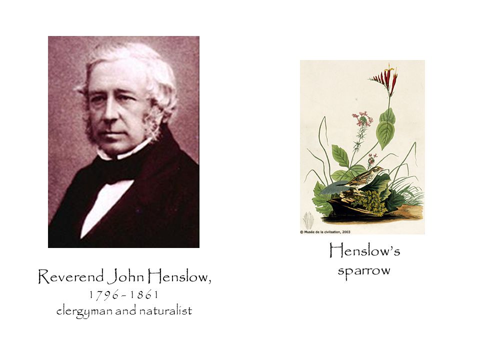 Reverend John Henslow, 1796 - 1861 clergyman and naturalist Henslow's sparrow