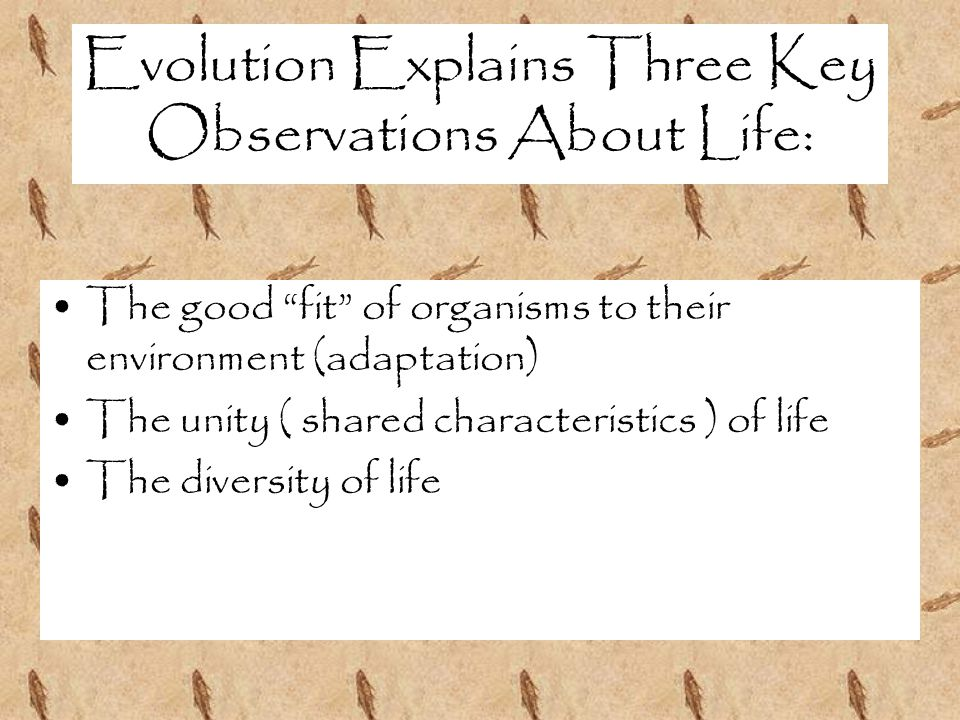 Evolution Explains Three Key Observations About Life: The good fit of organisms to their environment (adaptation) The unity ( shared characteristics ) of life The diversity of life