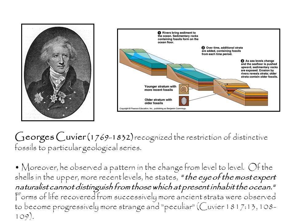 Georges Cuvier (1769-1832) recognized the restriction of distinctive fossils to particular geological series.