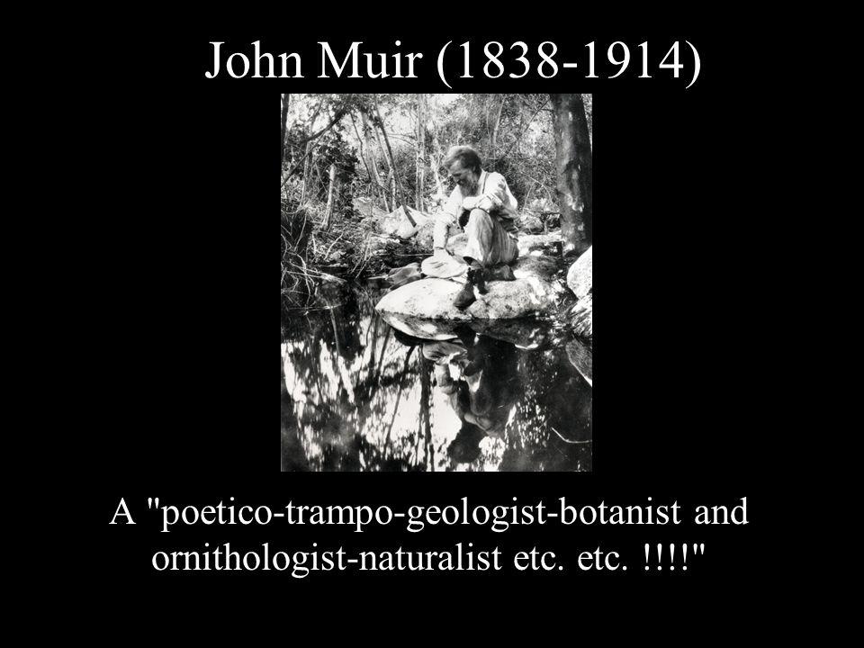 John Muir (1838-1914) A poetico-trampo-geologist-botanist and ornithologist-naturalist etc.