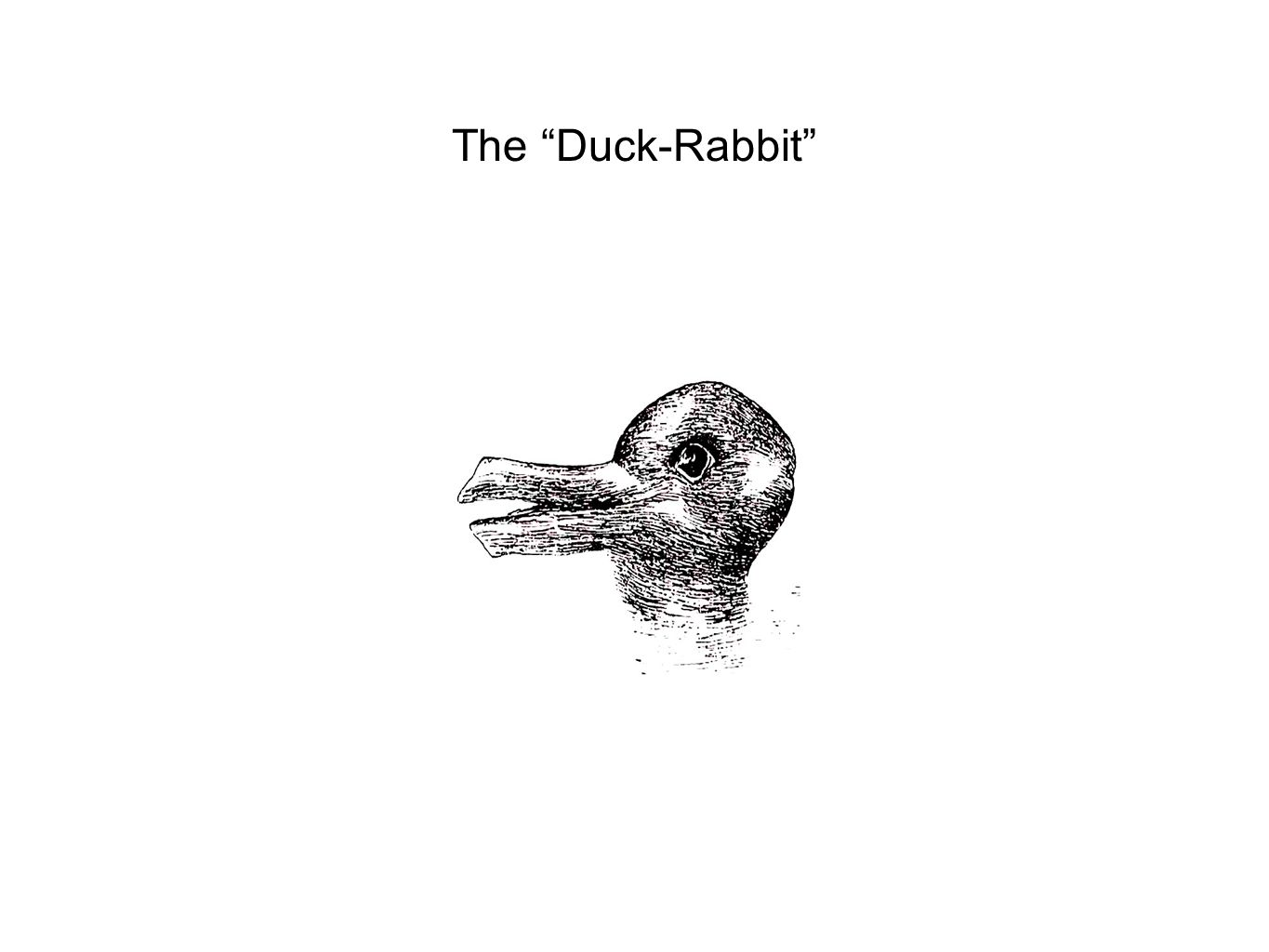 The Duck-Rabbit