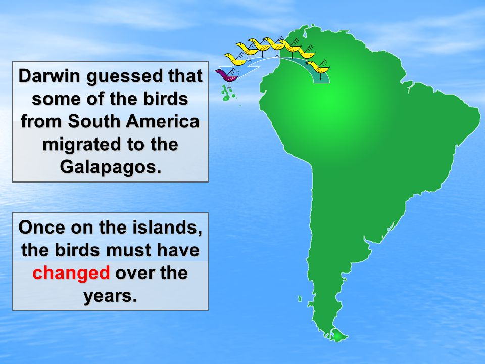 Darwin guessed that some of the birds from South America migrated to the Galapagos.