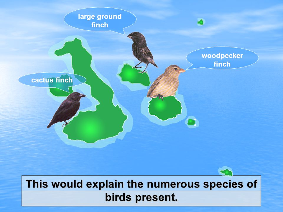This would explain the numerous species of birds present.