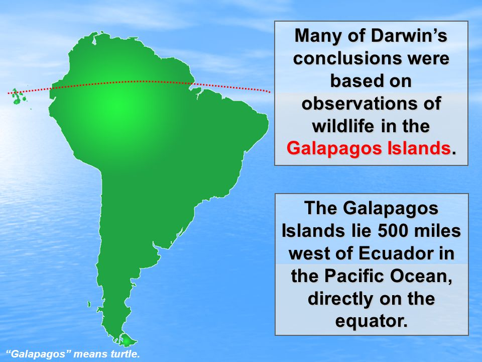 The Galapagos Islands lie 500 miles west of Ecuador in the Pacific Ocean, directly on the equator.