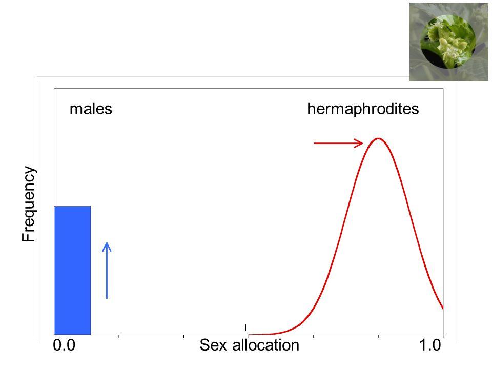 hermaphrodites maleshermaphrodites Sex allocation Frequency 0.01.0