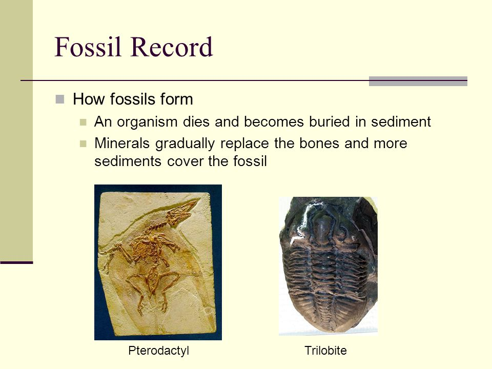 Evidence of Evolution Fossil Record Similarities in Body Structure Similarities in Early Development Vestigial Structures Similarities in DNA