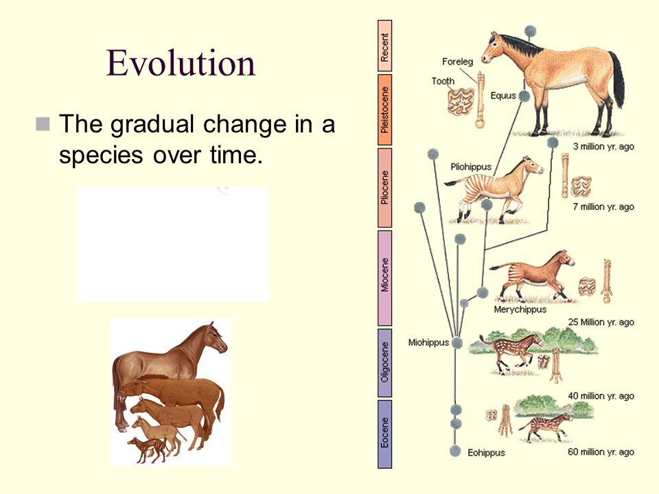 Darwin's Voyage On the Origin of Species (Darwin's book) For the 20 years that followed his return to England Darwin studied plants, animals and adaptations Darwin wrote about how species can change gradually over many, many generations and become better adapted to new environmental conditions.
