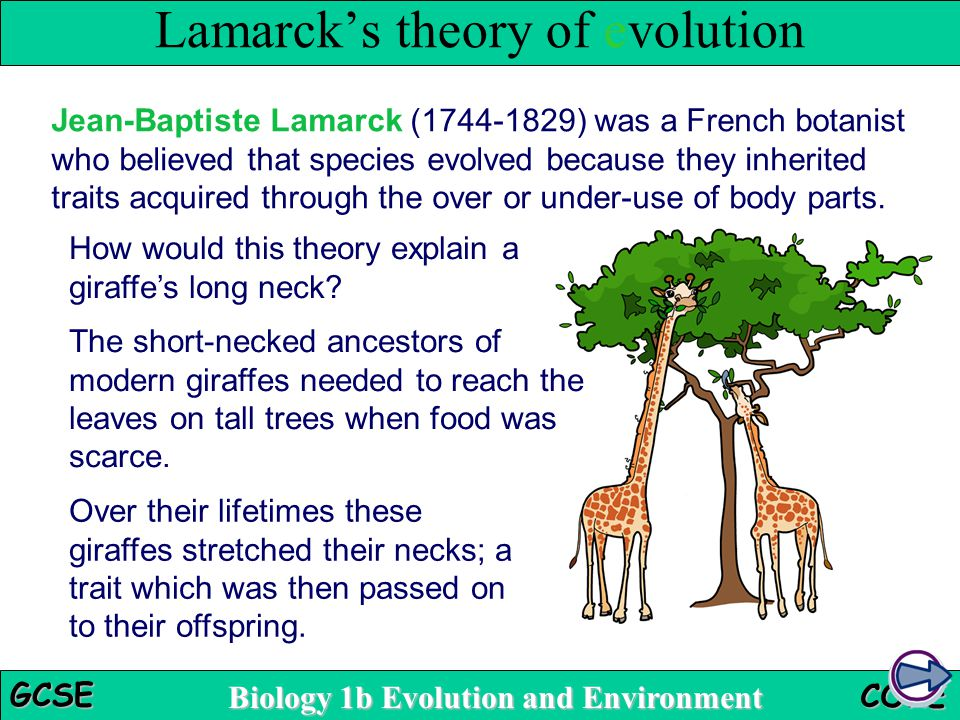 Biology 1b Evolution and Environment GCSE CORE The short-necked ancestors of modern giraffes needed to reach the leaves on tall trees when food was sc