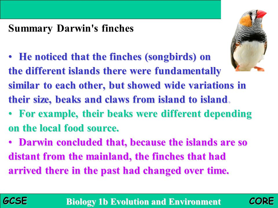 Biology 1b Evolution and Environment GCSE CORE Summary Darwin's finches He noticed that the finches (songbirds) onHe noticed that the finches (songbir