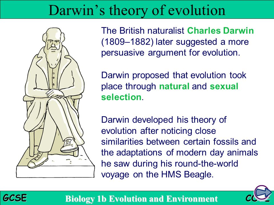 darwin theory Darwin's theory of evolution, is based on skeletal remaisn of animals, and comparing them with modern species he also did this as sort of a timeline evolution deosn't work this way, but think of evolution like a thread.