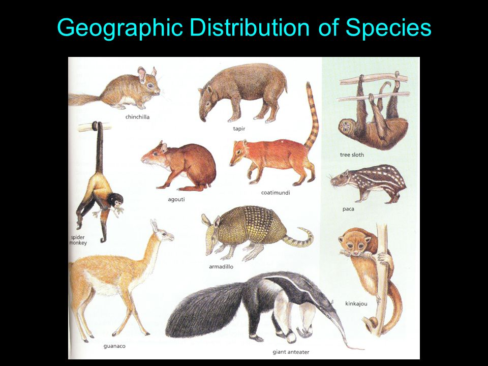 Geographic Distribution of Species