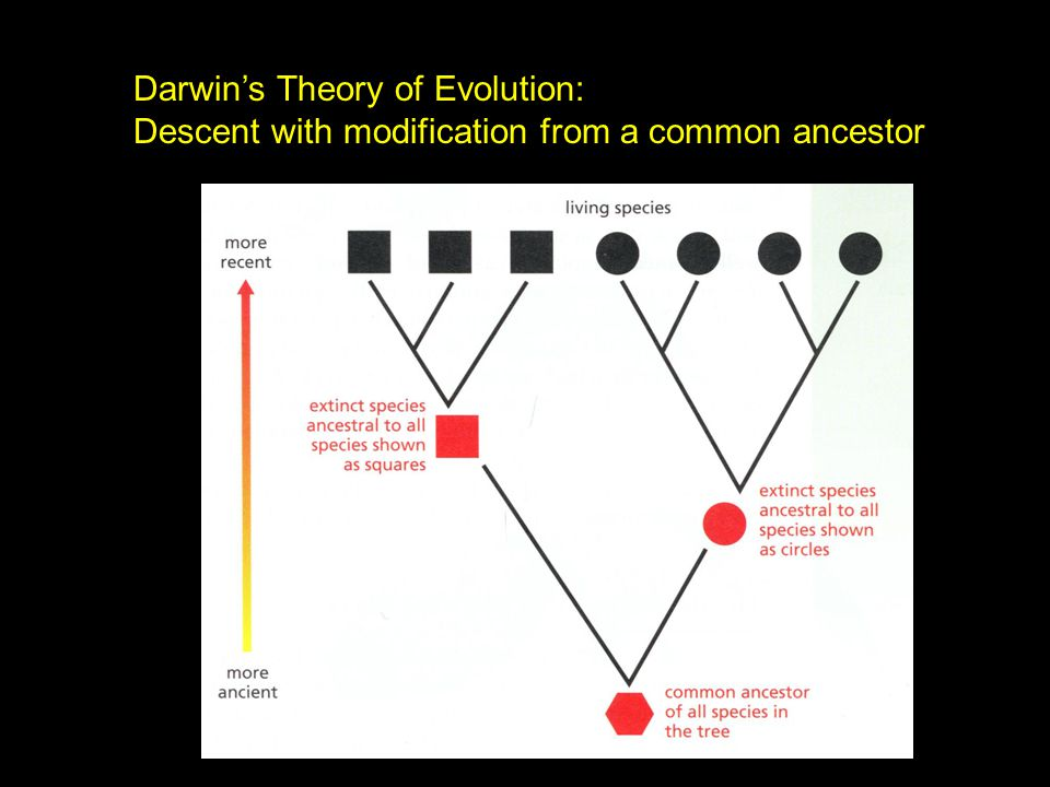 Darwin's Theory of Evolution: Descent with modification from a common ancestor